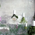 pflanzenbilder-wohnidee