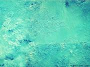 schwammtechnik-wand