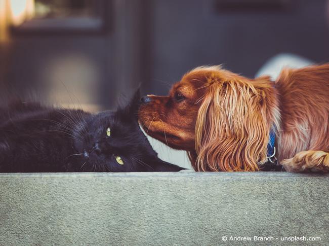 Hund und Katz sind meist erlaubt