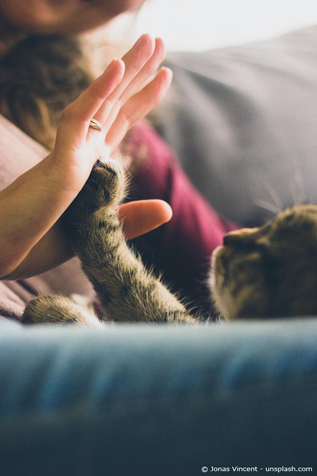 Katze gibt High-Five