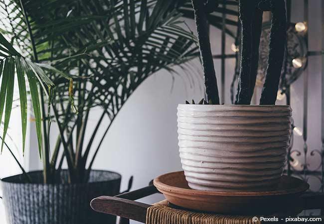 Die richtige Zimmerpflanze