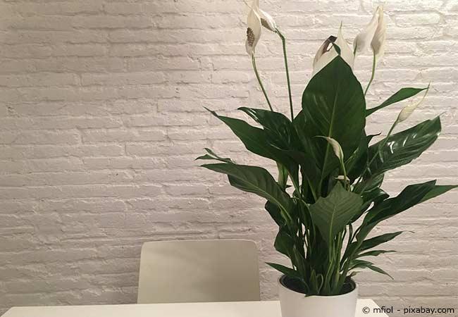 Hello darkness die richtigen zimmerpflanzen bei wenig licht wohnen hausxxl wohnen hausxxl - Robuste zimmerpflanze ...