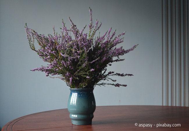 Auch in der Vase macht Heide eine gute Figur