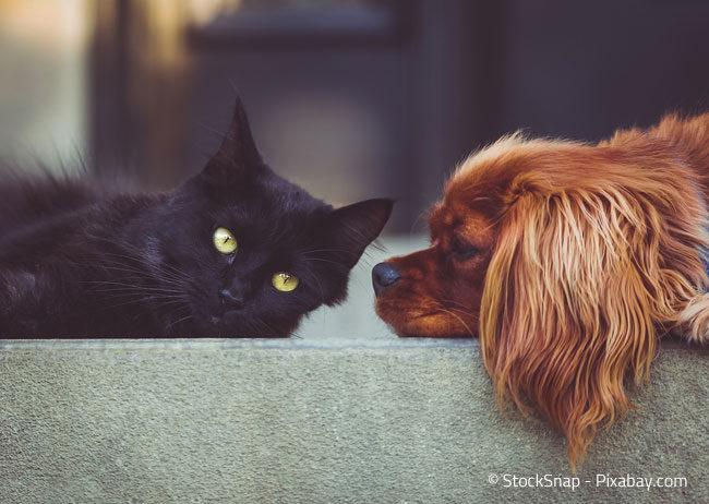 Hund und Katze als beste Freunde des Menschen