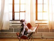 Einrichtung für Haustierbesitzer