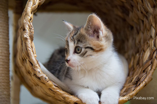 Ein Kratzbaum ist wichtig für die Beschäftigung der Katze