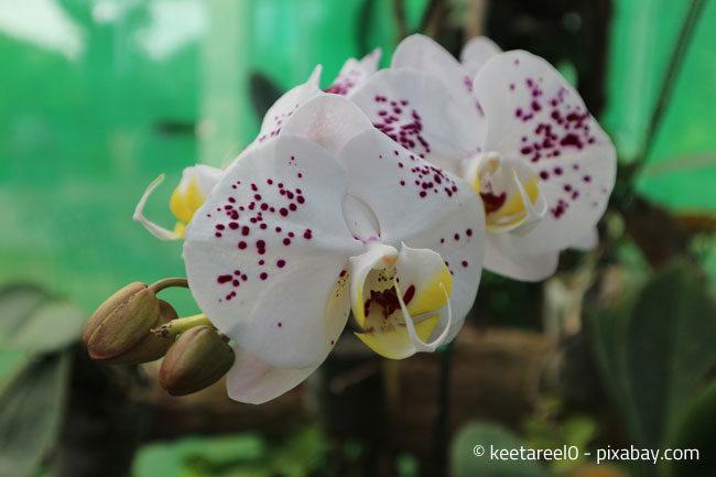 Orchideen sorgen für außergewöhnliches Ambiente