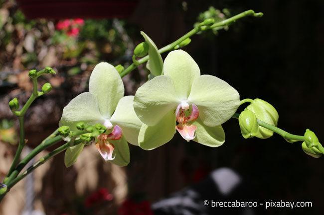 Orchideen gibt es in den unterschiedlichsten Variationen