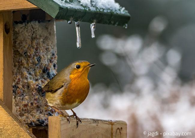 Helfen Sie den Vögeln mit einem kleinen Häuschen und etwas Futter über einen strengen Winter
