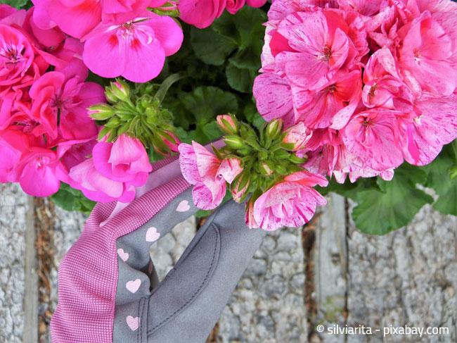 Sommerliche Pflegetipps Fur Balkonpflanzen Wohnen Hausxxl