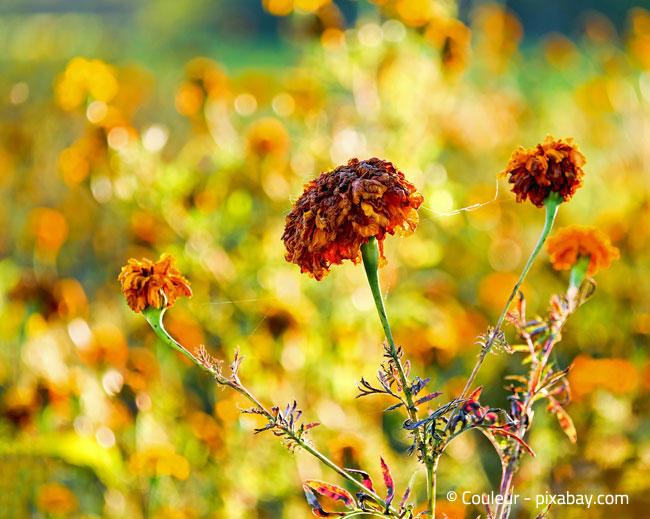 Welke Blüten sollten Sie abzupfen oder abschütteln