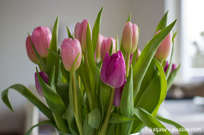 Ein Strauß mit Frühlingsblumen erhellt garantiert jedes Zimmer!