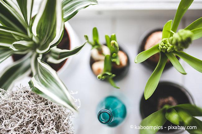Zimmerpflanzen verleihen Ihrem Zuhause einen natürlichen Look.