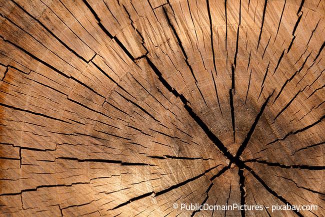 Holz ist nicht gleich Holz, da sollten Sie genau unterscheiden