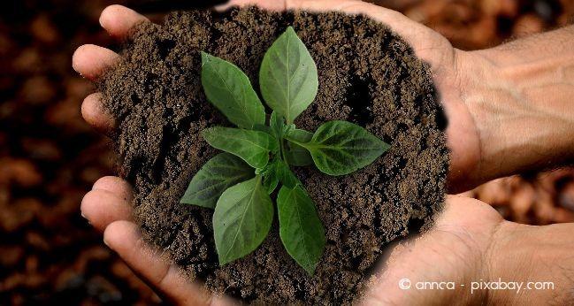 Besonders junge Pflanzen sollten Sie häufig umtopfen, da diese sich im Wachstum befinden