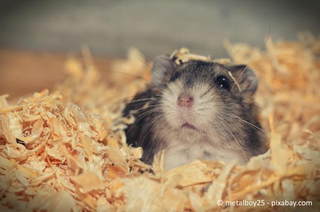 Auch Kleintiere dürfen keine Belästigung darstellen. Dazu zählt nicht nur Lärm-, sondern auch Geruchsbelästigung.