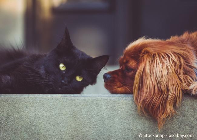Ob und welche Katzen und Hunde als Kleintiere gelten, ist in jedem Bundesland verschieden.