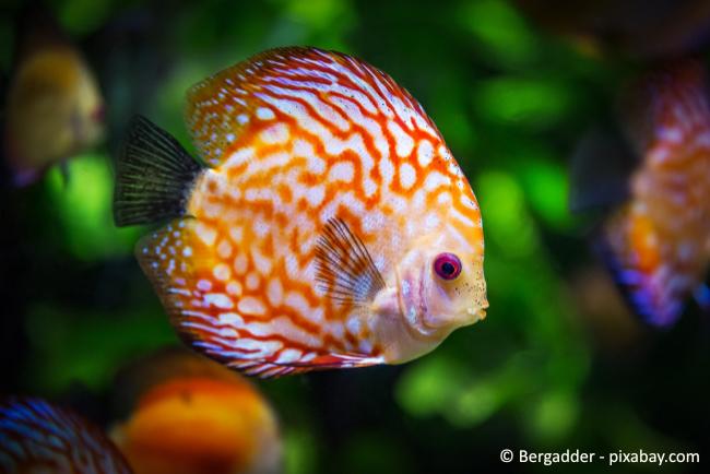 Auch Fische sind klassische Kleintiere. Achten Sie je nach Größe jedoch am besten auf eine entsprechende Versicherung.