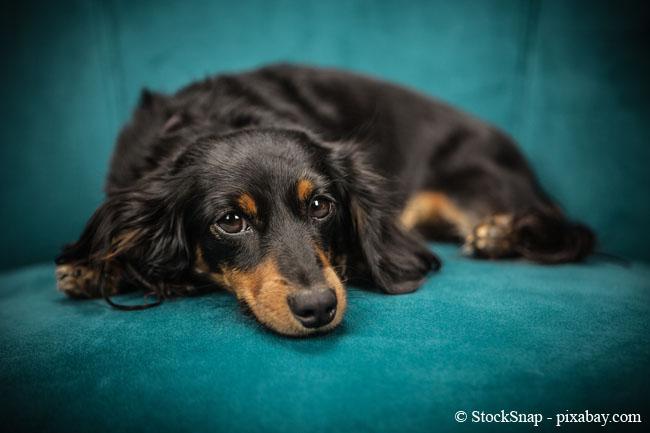 Natron hilft nicht nur gegen Flecken, sondern auch gegen Gerüche. Haustiere können also getrost weiter auf der Couch liegen, schließlich haben Sie nun ein perfektes Mittel gegen Gerüche in Polstermöbeln.