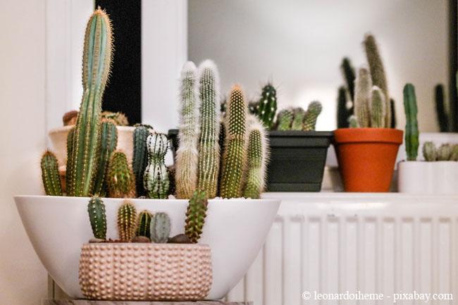 Um übergossene Pflanzen wieder auszutrocknen, hilft es, sie auf die Heizung zu stellen.