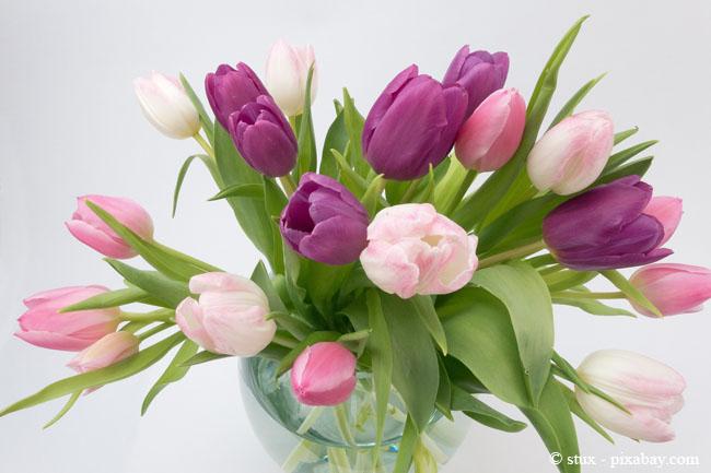 Frühblüher wie Tulpen in der Vase sind immer wieder ein echter Hingucker in Ihrer Wohnung.